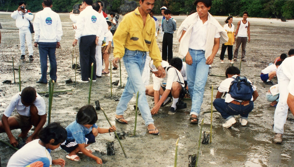 Planting the Trees in Thai Hearts_5