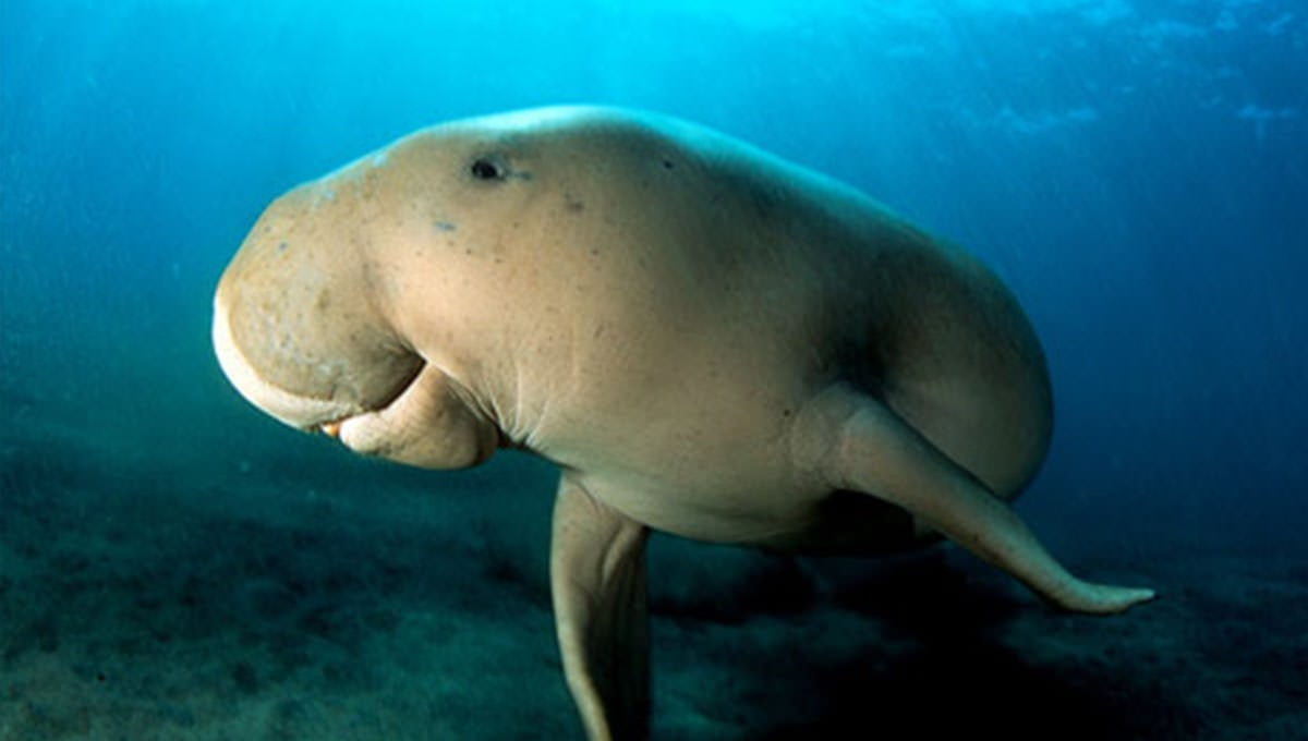 The Conservation of Dugongs and Sea Grass_3